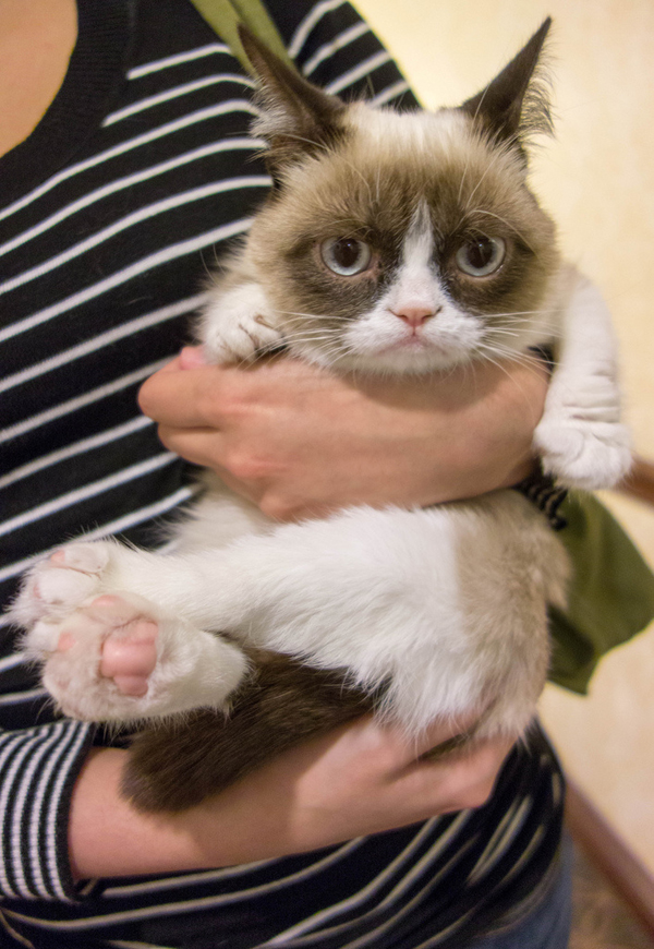 20121203-catster-grumpy-cat-laughing-squid-tardar-sauce-reddit-today-show-5